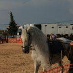 Andrea Magos de la equitación 2016 (114)