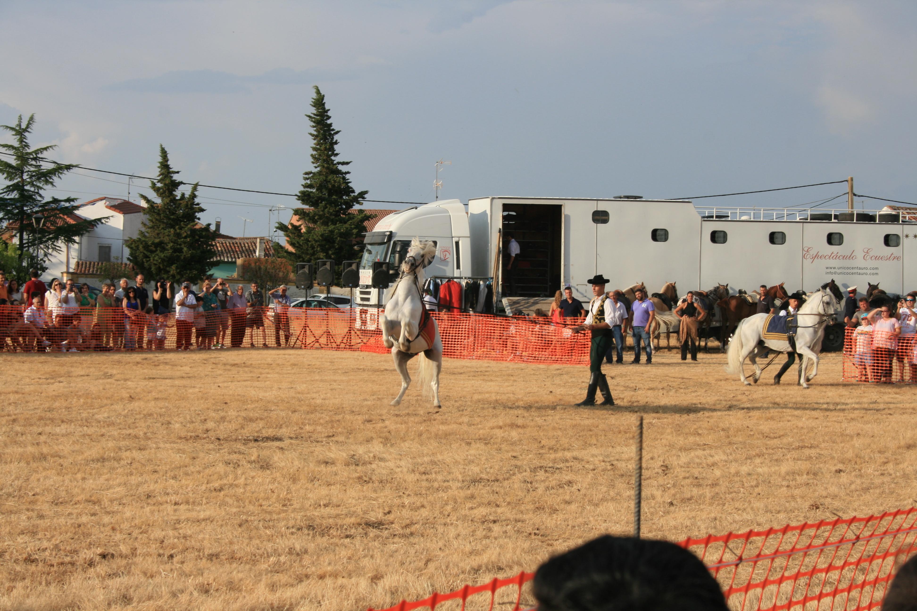 Andrea Magos de la equitación 2016 (132)