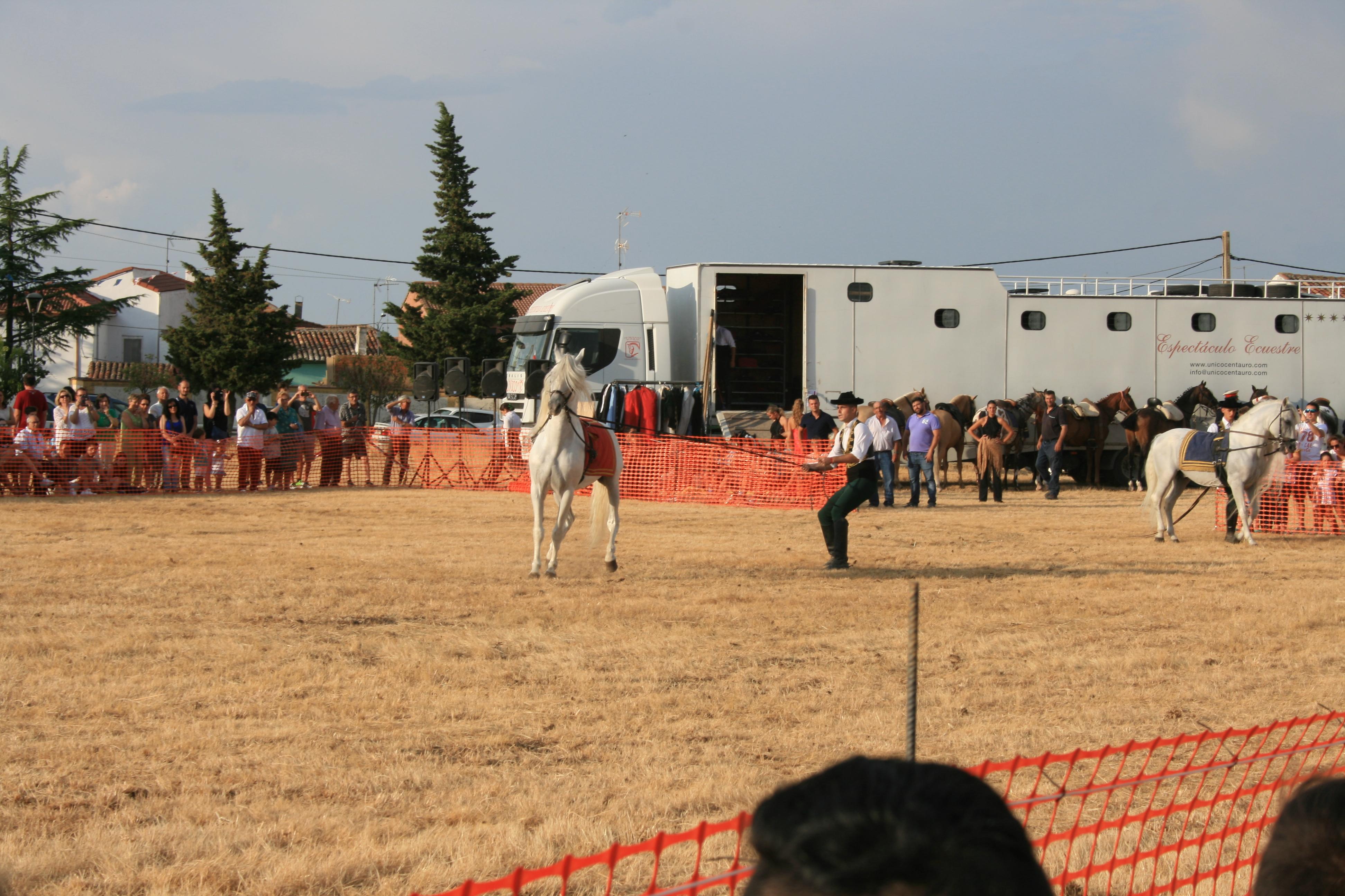 Andrea Magos de la equitación 2016 (133)