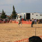 Andrea Magos de la equitación 2016 (134)