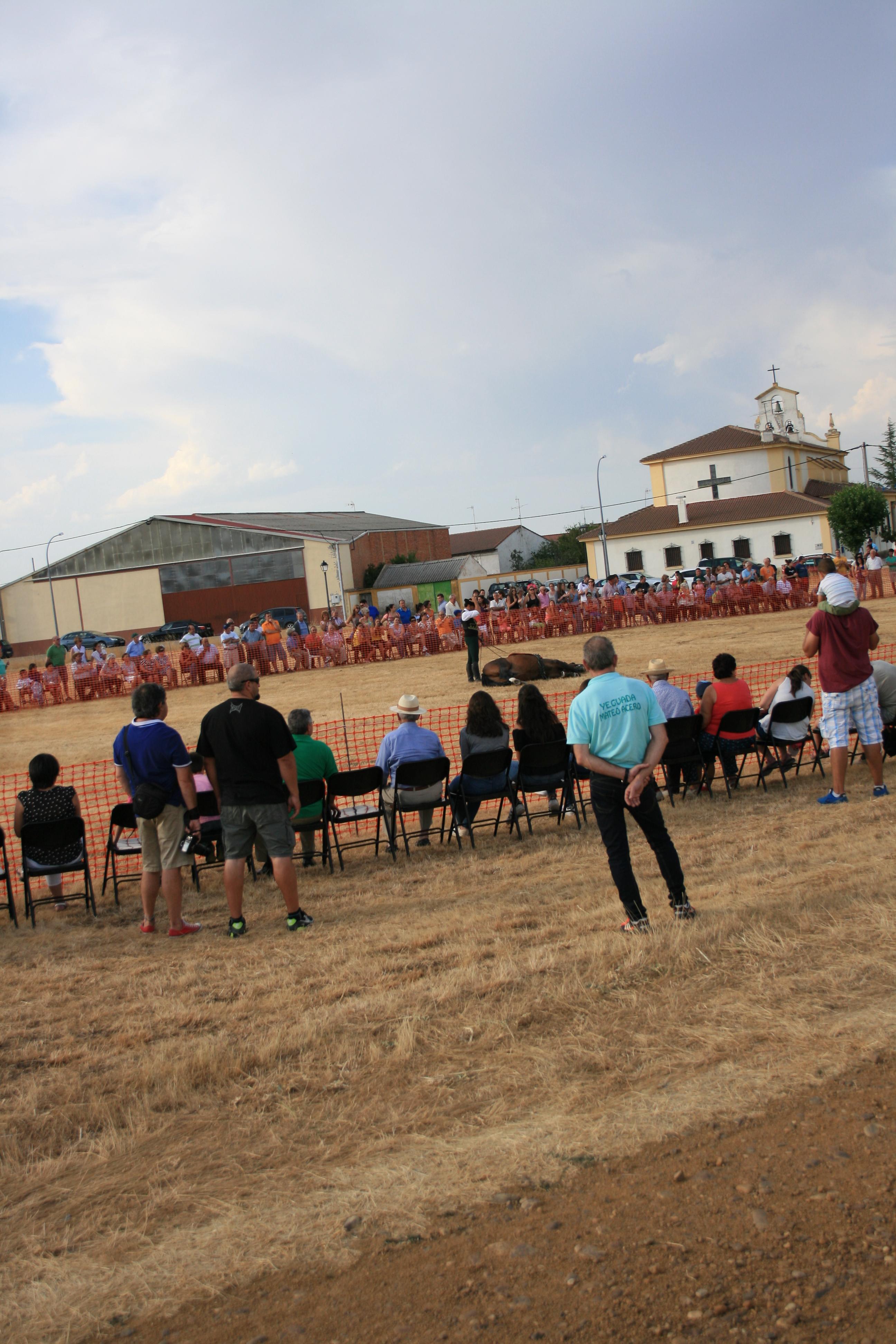 Andrea Magos de la equitación 2016 (66)