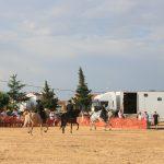 Andrea Magos de la equitación 2016 (90)