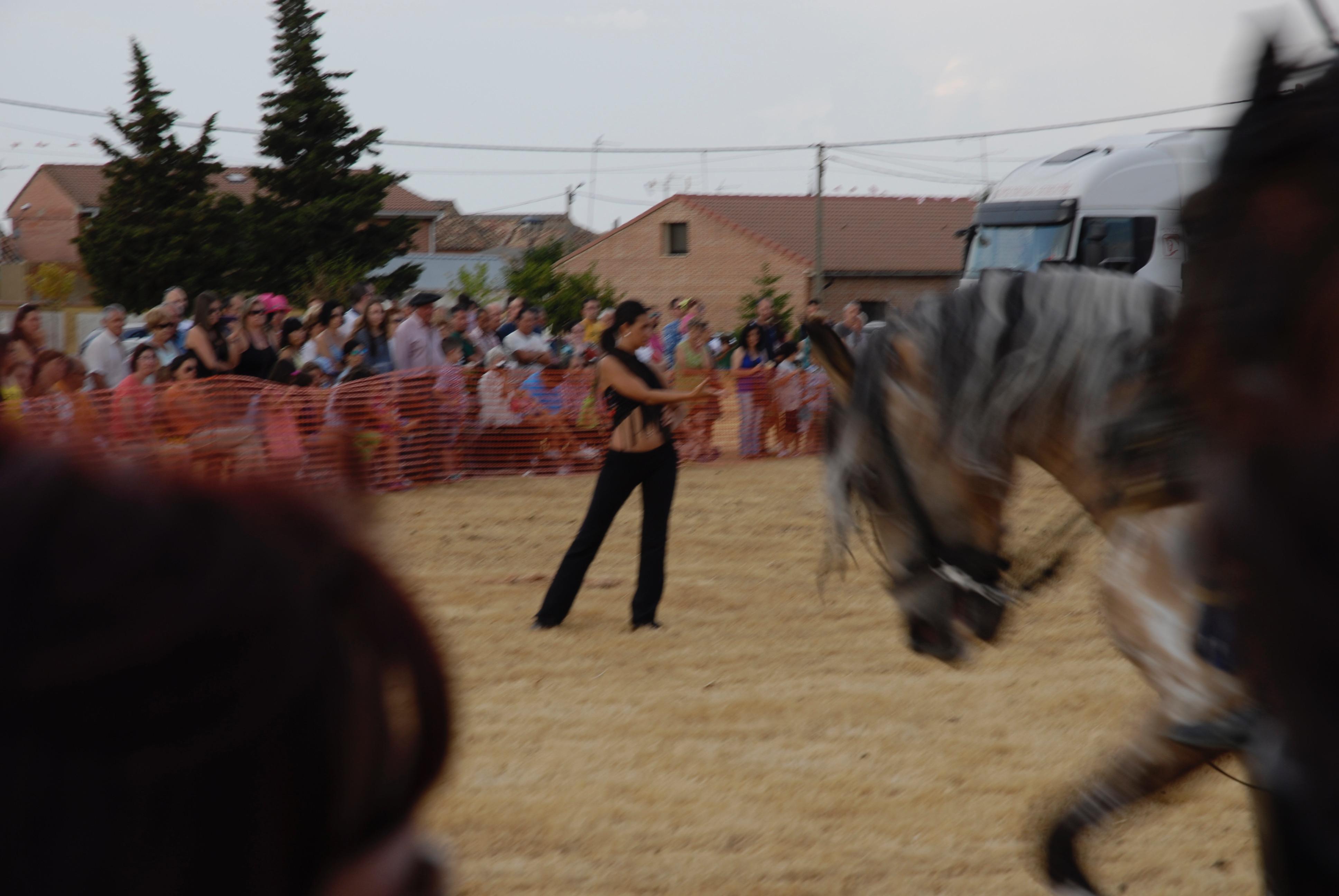 Magos de la equitación 2016 (111)