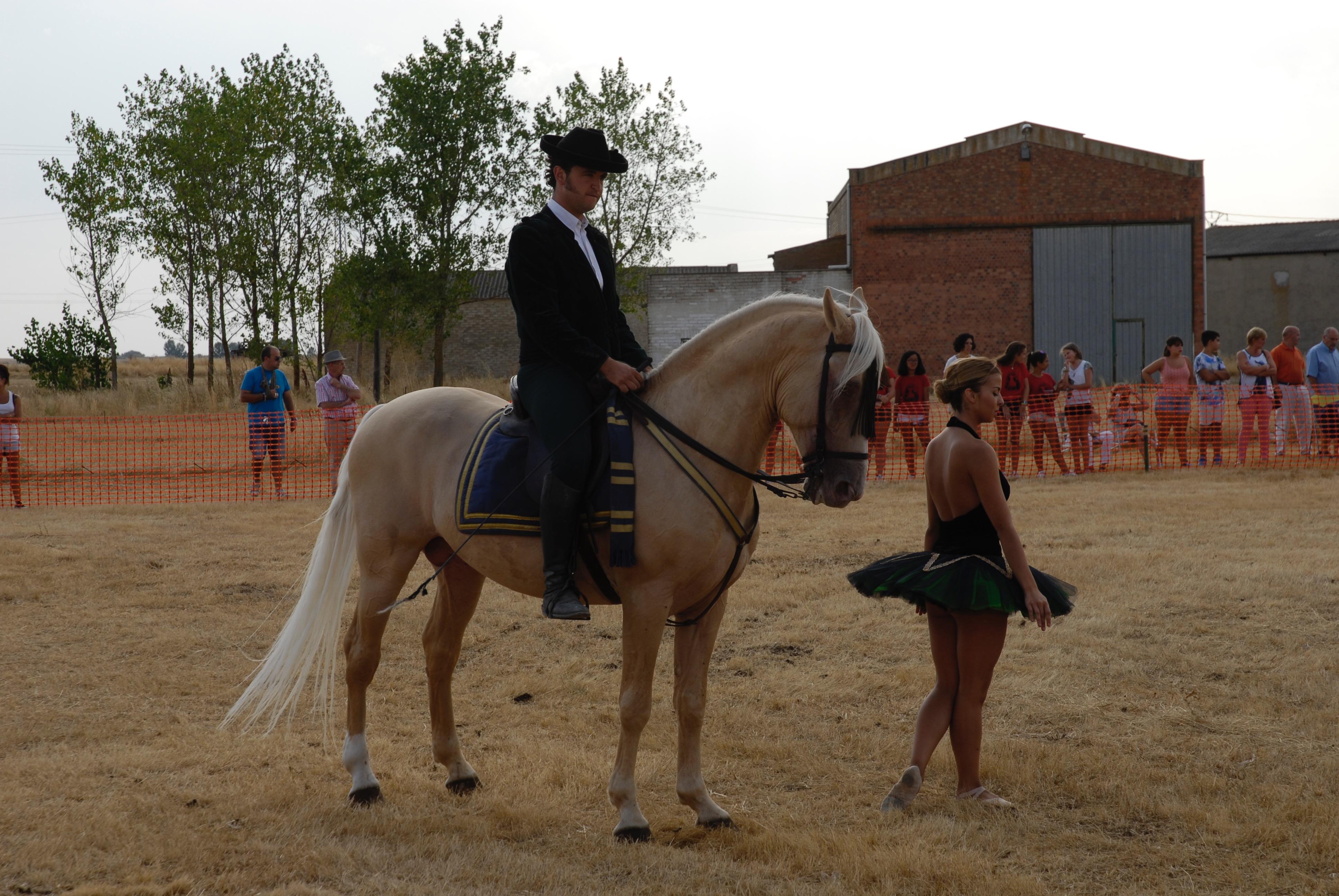 Magos de la equitación 2016 (13)