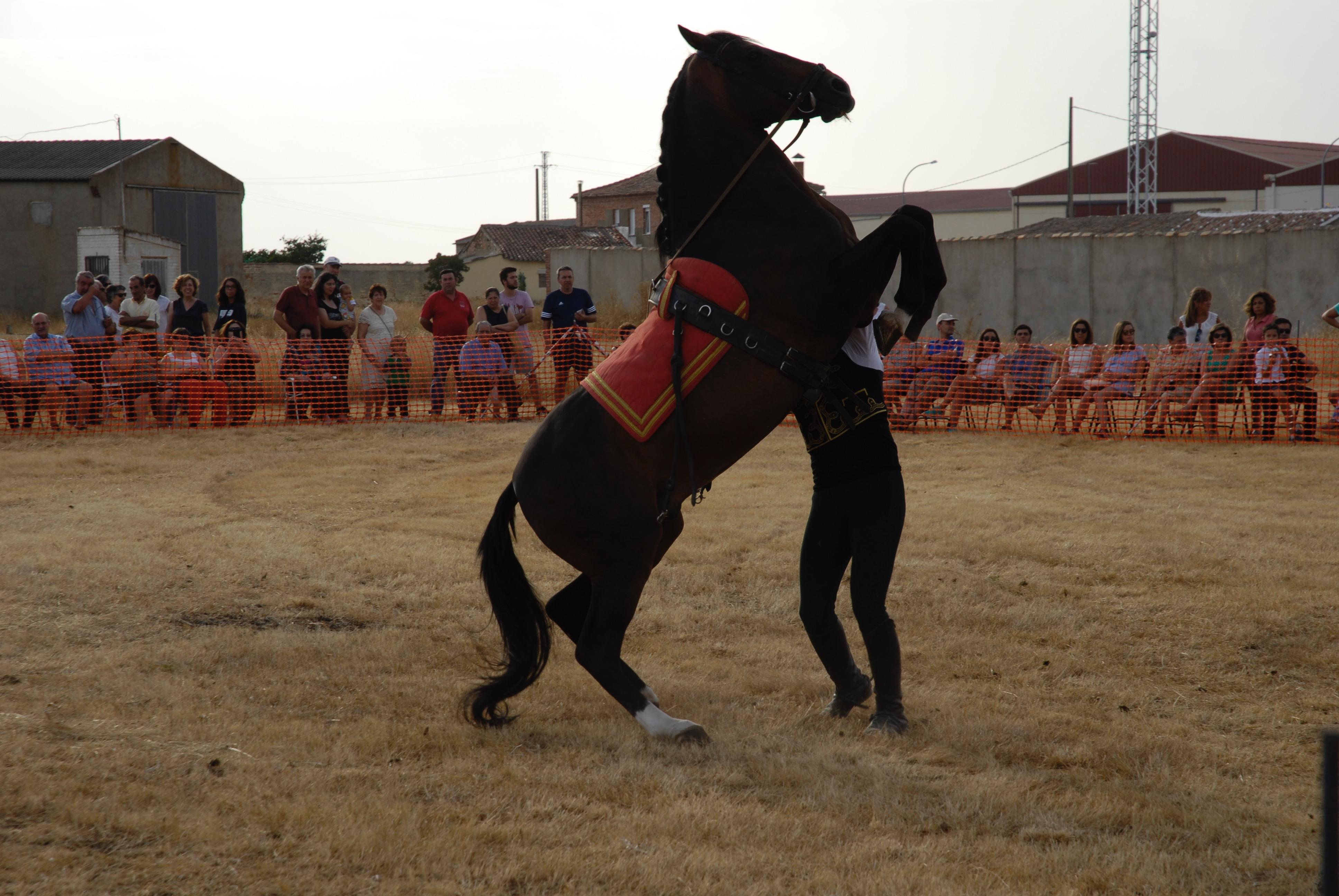 Magos de la equitación 2016 (23)