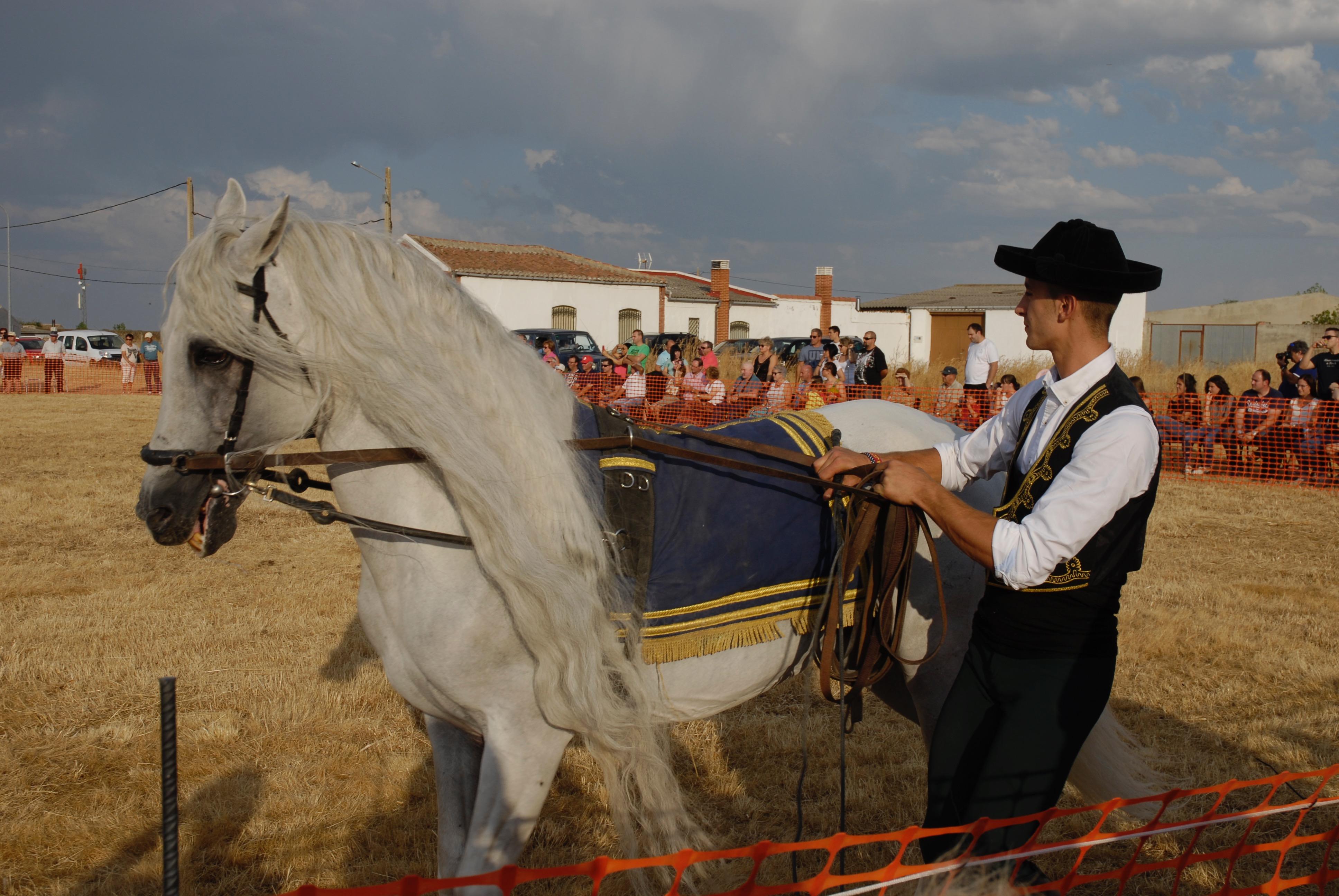 Magos de la equitación 2016 (3)