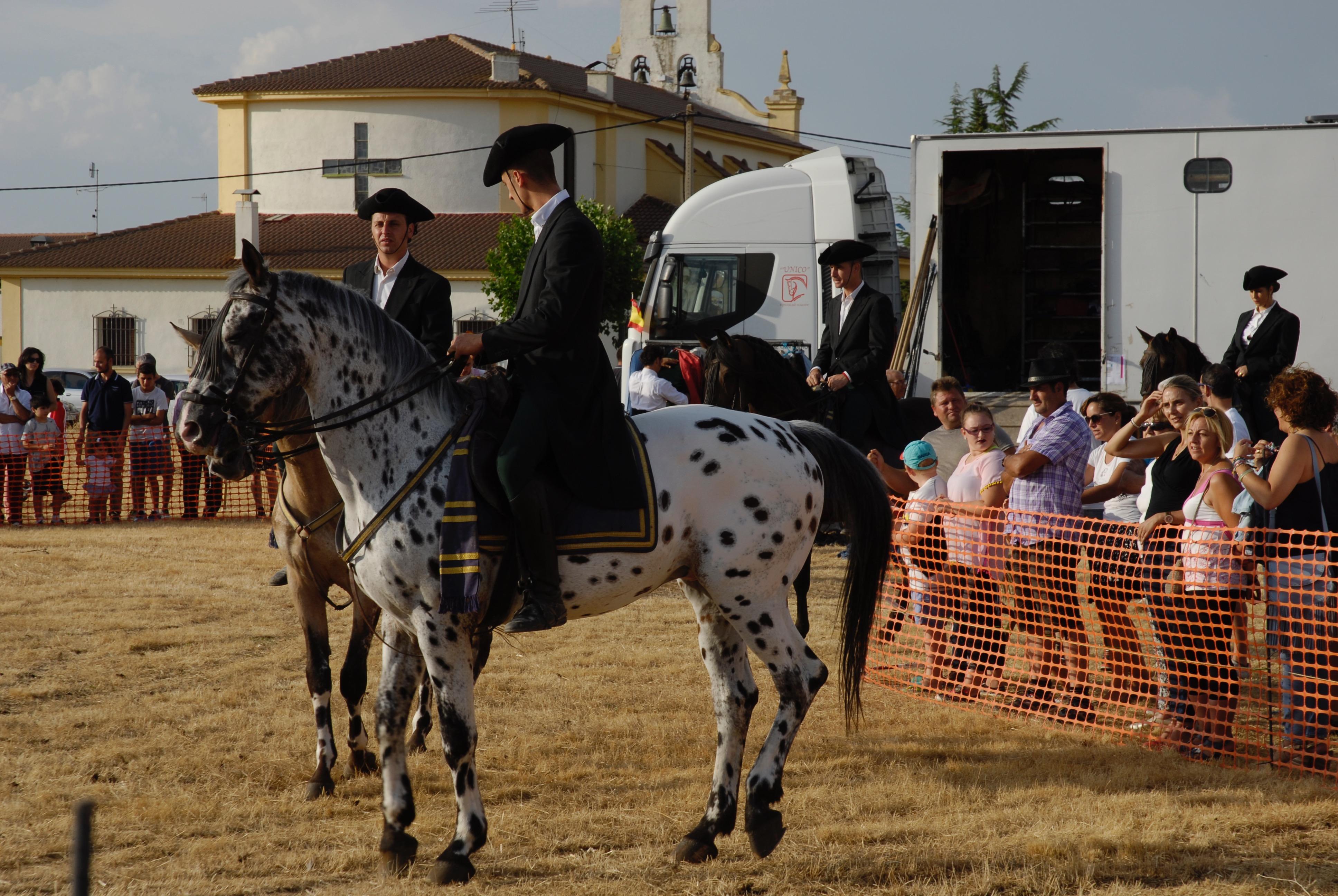 Magos de la equitación 2016 (39)