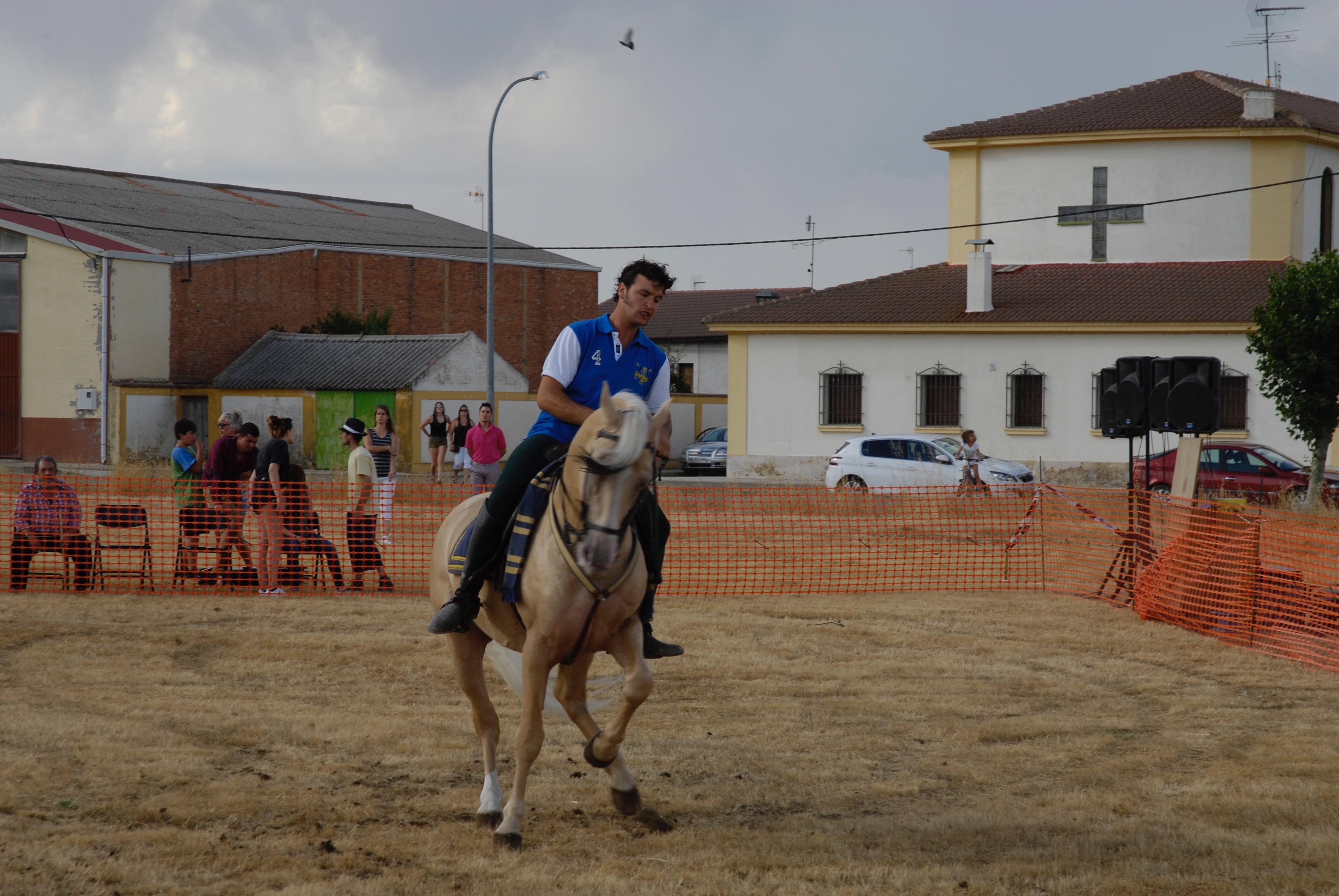 Magos de la equitación 2016 (4)
