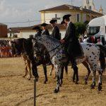 Magos de la equitación 2016 (40)