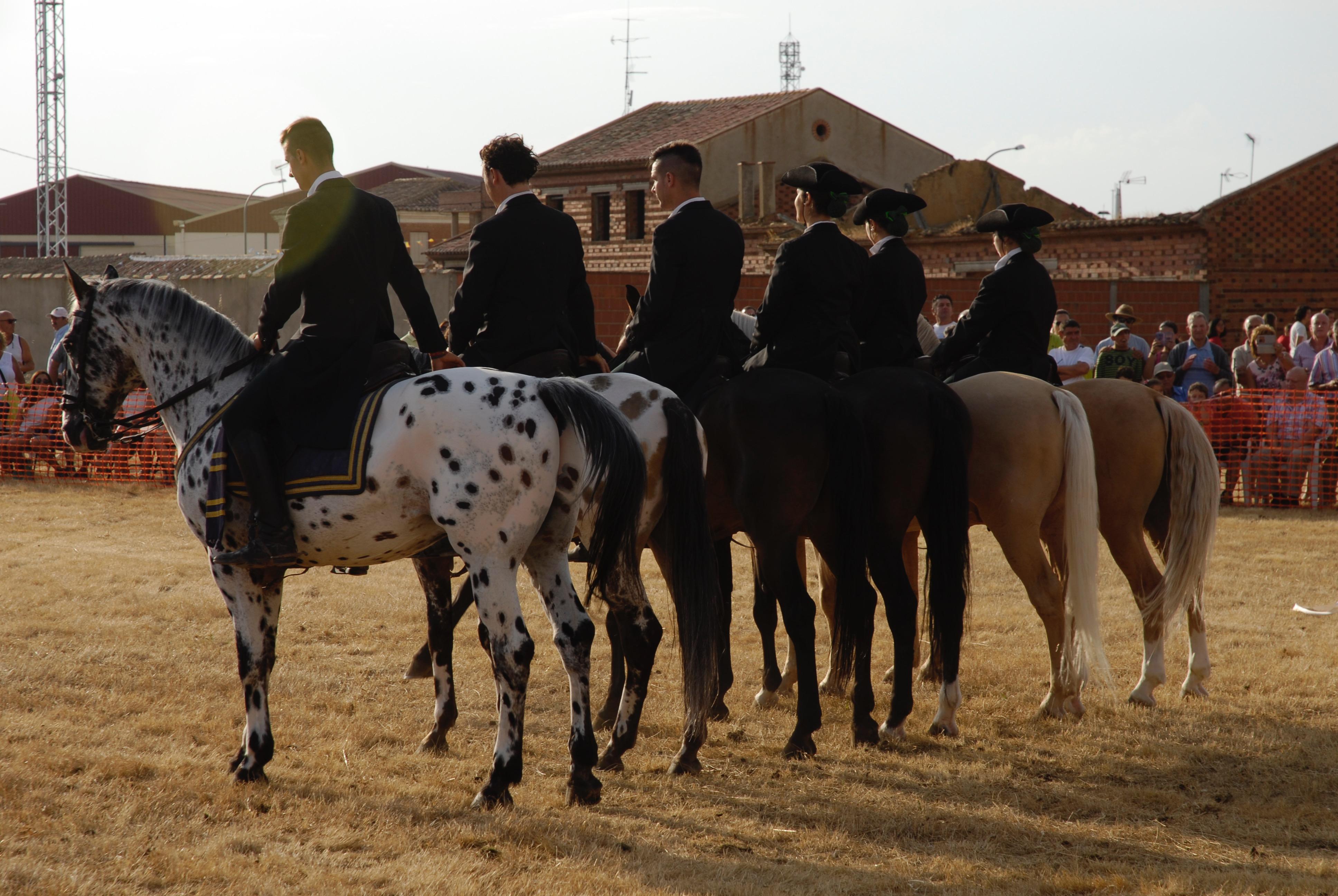 Magos de la equitación 2016 (42)