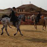 Magos de la equitación 2016 (53)