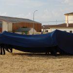 Magos de la equitación 2016 (54)