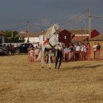 Magos de la equitación 2016 (64)