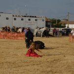 Magos de la equitación 2016 (76)
