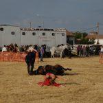Magos de la equitación 2016 (78)