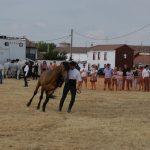 Magos de la equitación 2016 (90)