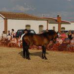 Magos de la equitación 2016 (92)