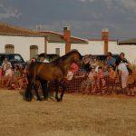 Magos de la equitación 2016 (93)