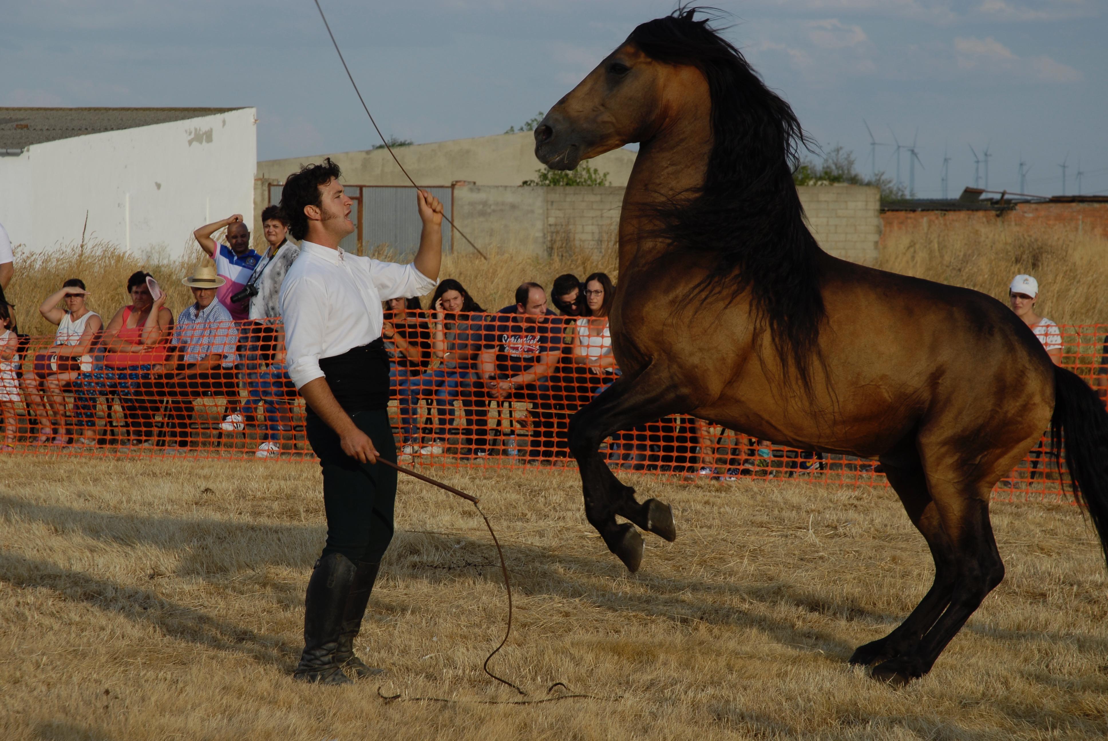 Magos de la equitación 2016 (95)